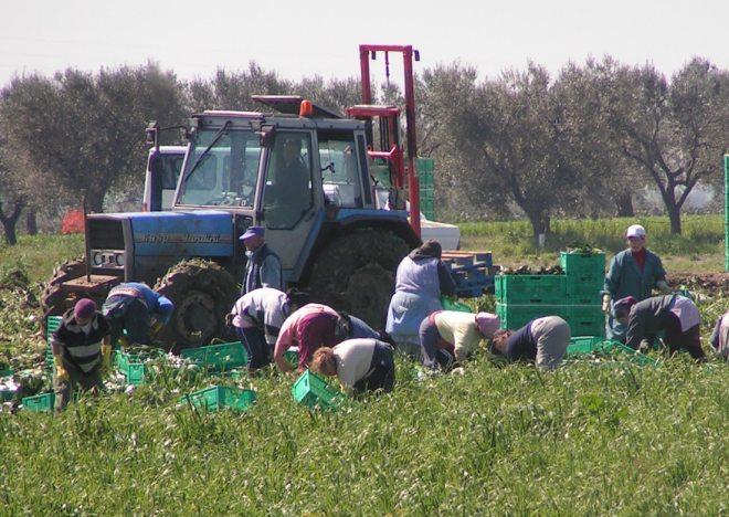 Alessandria: dopo la Angeleri, vertenza di braccianti agricoli anche alla Balduzzi