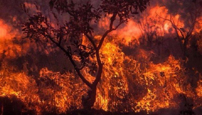 Immagini shock dall'Amazzonia che brucia, mentre Bolsonaro nega il disastro