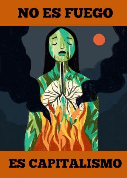 Amazzonia: il polmone del mondo si incendia, Bolsonaro se ne infischia