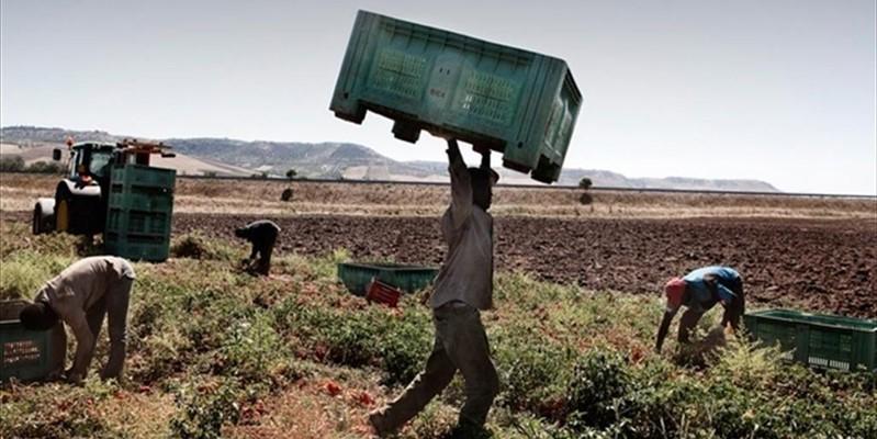 Rischio emergenza alimentare: perché l'Italia è a caccia di manodopera straniera?