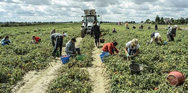 """Braccianti agricoli: in tutta Europa """"porti chiusi"""" ma... sfruttamento aperto!"""