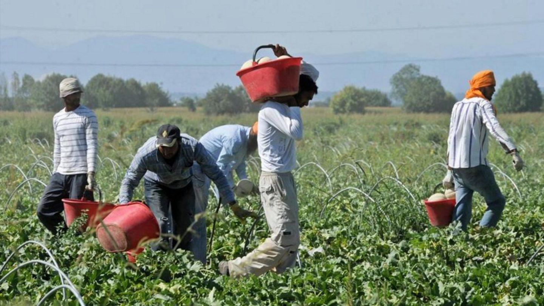 Gli agrari confessano che gli immigrati sono indispensabili: diritti politici e civili per tutti e tutte subito!